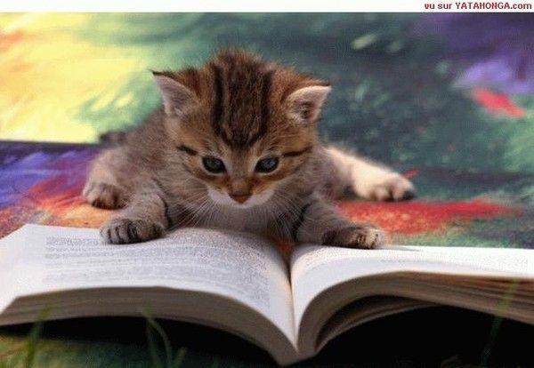 Mignon petit chat - Image de petit chat ...